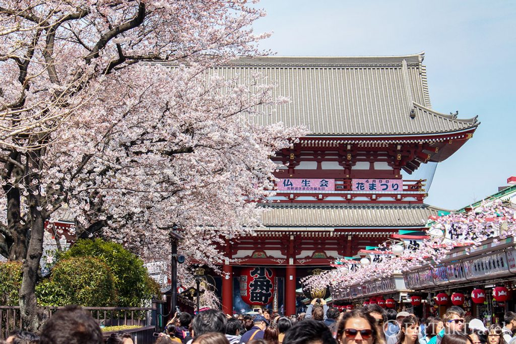 If you can make your two weeks in Japan coincide with Sakura season, you won't be disappointed