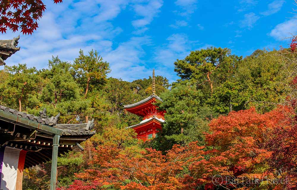 If you time it right, you can see beautiful foliage during your two weeks in Japan
